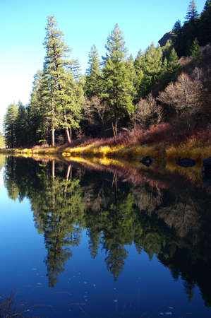 Forested river bank reflected in a mountain creek. Stock Photo - 2068127