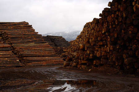 Piles of logs await processing at the mill. Stock Photo
