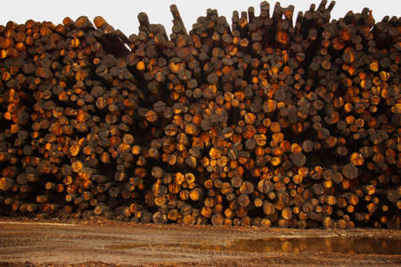 lumber mill: A tall pile of logs at a lumber mill.