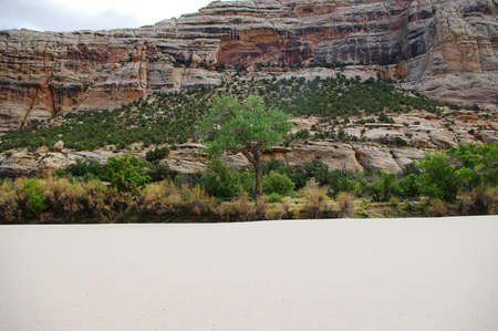 cottonwood canyon: Cottonwood tree in a river canyon with a large sand beach. Stock Photo