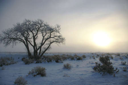 Sun rising over frozen field with icy cottonwood. Stock Photo - 4068488