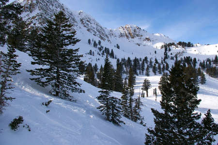 Rugged mountain with ski trails and fir trees.