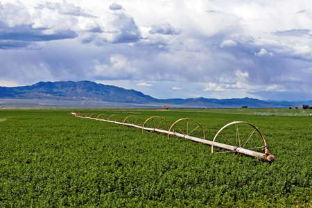 A field of alfalfa with a wheel line sprinkler. Stock Photo - 5018702