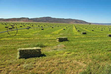 Bright green hay field with bales ready for stacking.