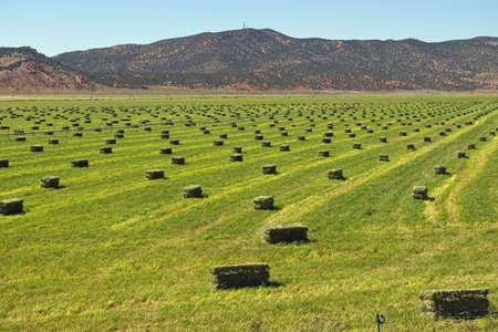 hay field: Bright campo verde con balle di fieno pronto per l'impilamento.