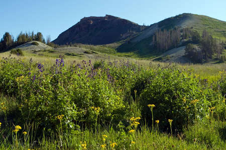 A clump of wildflowers in a meadow below a mountain peak. Stock Photo - 5205876