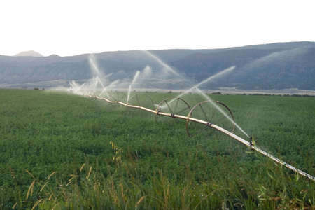 A wheel line operating in an alfalfa field. Imagens - 5236421
