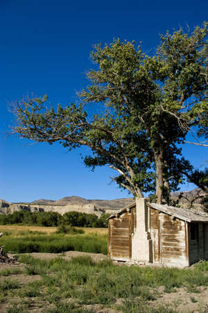 homestead: Weathered homestead with a cottonwood tree in the desert.