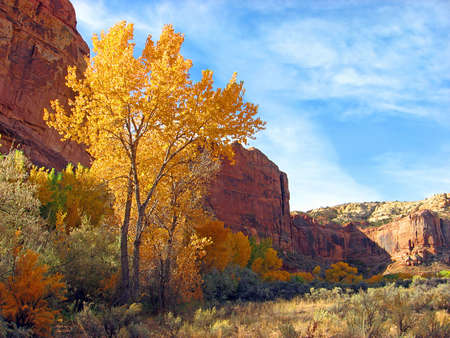 Towering red rock canyon walls and trees with autumn foliage.