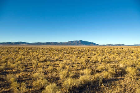 sagebrush: View of miles of sagebrush with a blue mountain in the distance. Stock Photo