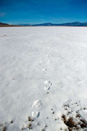 disappears: One set of footprints disappears across the Little Salt Lake. Stock Photo