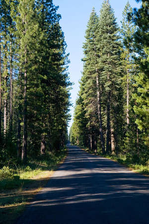 disappears: A road disappears into an area of tall, dense forest.