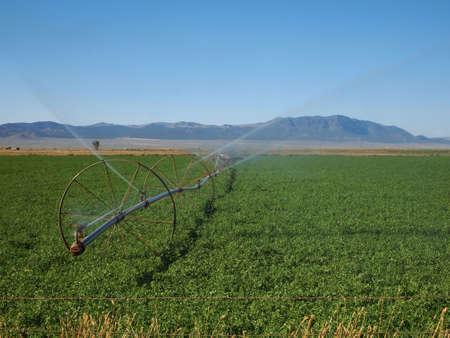 A wheel line irrigates an alfalfa field. Banco de Imagens - 7766077