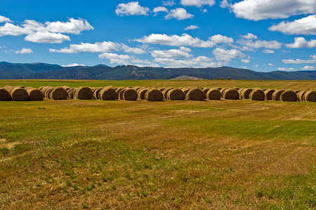 A line of baled hay in a ranch meadow. photo