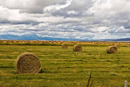 Round bales of hay in a ranch meadow. Stock Photo - 7766114