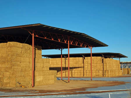 barns winter: Alfalfa stored for the winter in open sided hay barns.
