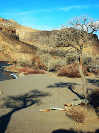 cottonwood canyon: A sand bar in a desert river with bare cottonwoods. Stock Photo