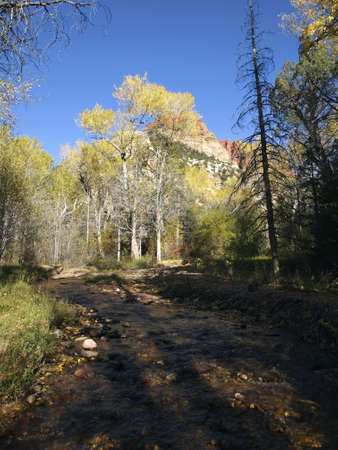 A small creek passes through a canyon where cottonwood trees are turning color. photo