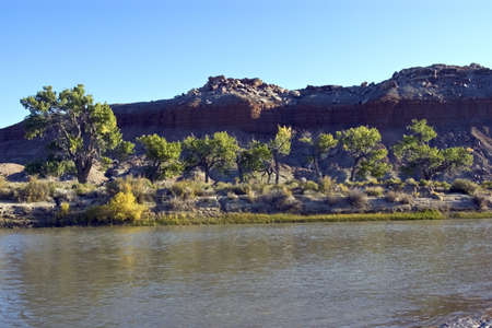 cottonwood canyon: A line of cottonwood trees on the bank of a desert river.