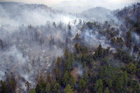 forest fire: El humo denso pasando de un incendio forestal a lo largo de una cresta