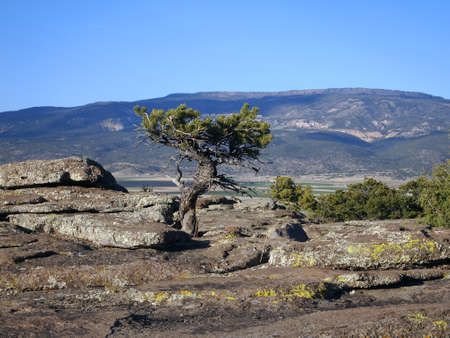 high plateau: High plateau in background with small pinyon tree in foreground