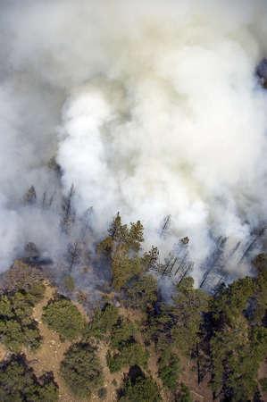 forest fire: El humo denso pasando de un incendio forestal