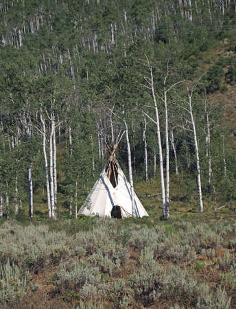 aspen grove: A lone teepee sits in a small aspen grove