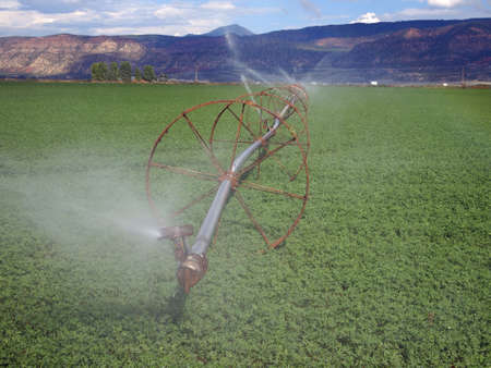 A rural alfalfa field with a wheeled irrigation line  Stock Photo