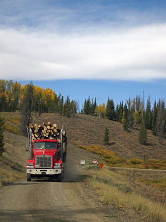 A log truck leaves the forest with a load of logs for the lumber mill. photo