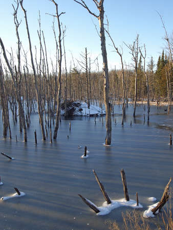 ice dam: An ice covered beaver pond in the northern forest