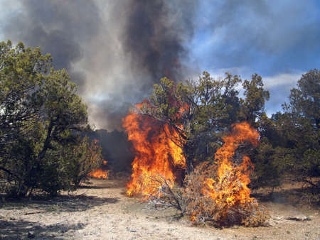 A fire burning in a pinyon-juniper shrub land. Imagens