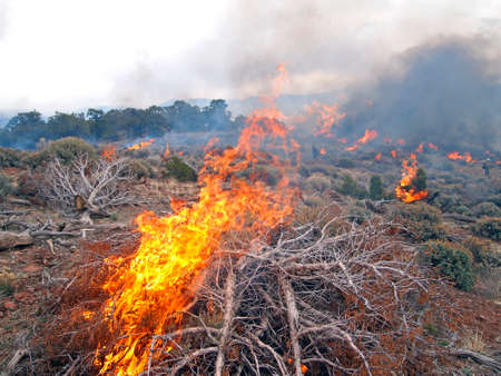 prescribed: Wildland fire fighters use prescribed fire to manage rangeland vegetation.