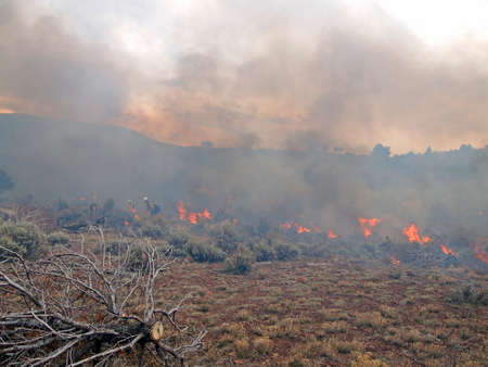 Wildland fire fighters use prescribed fire to manage rangeland vegetation. Imagens