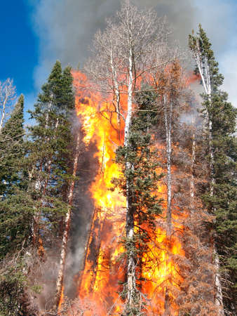 A hot fire torches trees in the forest. Imagens