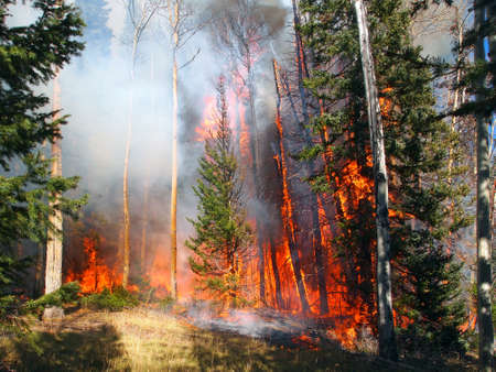 A wildfire burns in a fir and aspen forest.