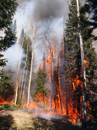 A wildfire burns in an aspen and fir forest.