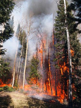 A wildfire burns in an aspen and fir forest. Imagens - 33427728