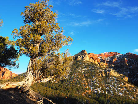 A juniper tree on a ridge in the mountains. Imagens
