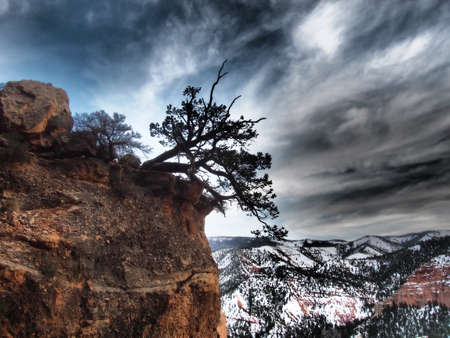 A pinyon tree on the edge of the cliff. Imagens