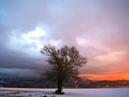A poplar tree in the valley during a winter sunset.