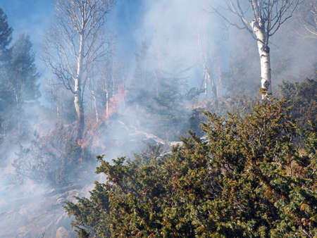 shrubs: A late season forest fire burns shrubs, aspen, and spruce. Stock Photo