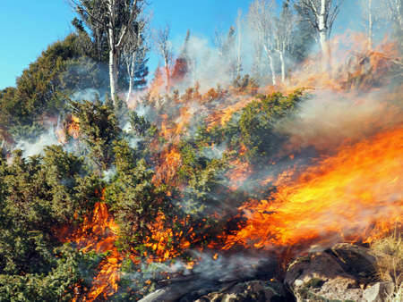 A late season forest fire burns shrubs, aspen, and spruce. Imagens
