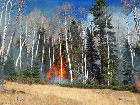 A late season forest fire burns shrubs, aspen, and spruce. Stock Photo
