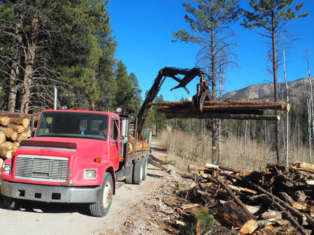 Equipment and wood decks at a logging site. Imagens - 133690813