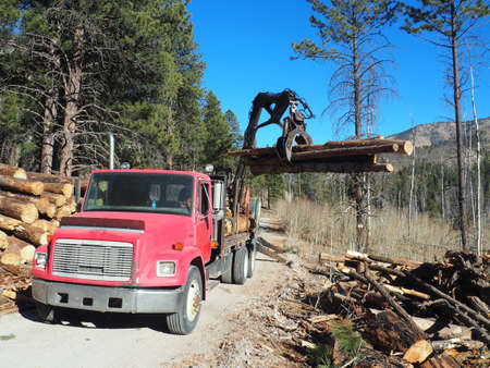Equipment and wood decks at a logging site. Imagens - 133690814