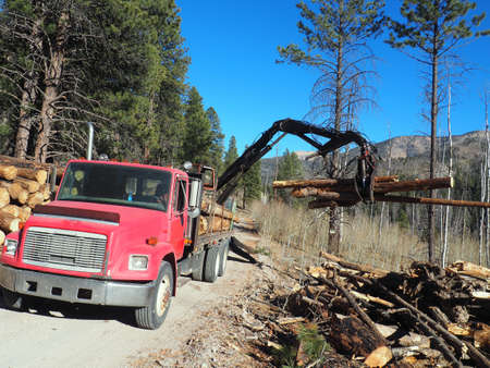 Equipment and wood decks at a logging site. Imagens - 133690816