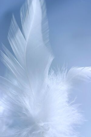 airy texture: Close-up of a white feather on a blue background. Macro photograph: shallow depth of field!