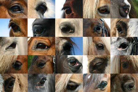quarter horse: A collection of horse eyes