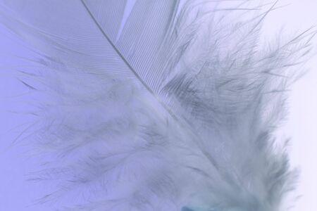 plume blanche: Close-up d'une plume blanche sur fond bleu. Macro photographie: une faible profondeur de champ!