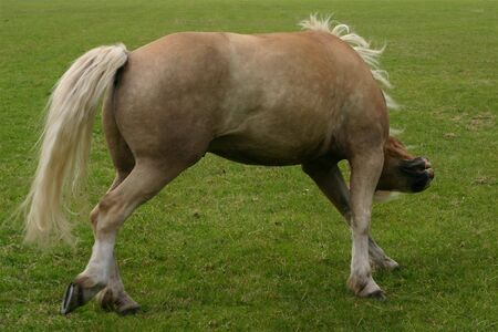A horse in a funny pose, running in a green field photo